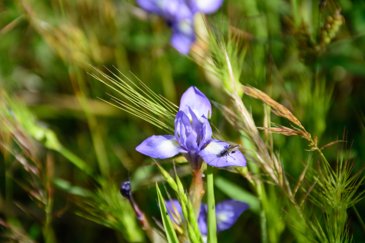 Fiume Alcantara - fiori